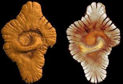 El origen de la vida y desarrollo de las civilizaciones. Fosiles