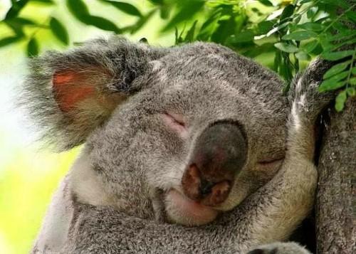 3  Las abejas nacen con el Q Es Un Koala