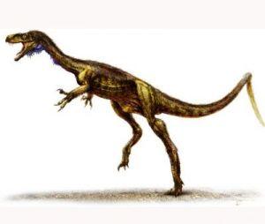 Encuentran Posible Dinosaurio Mas Antiguo Del Mundo Universitam En este grupo, el pubis apuntaba hacia atrás y hacia abajo, paralelo al isquion. encuentran posible dinosaurio mas