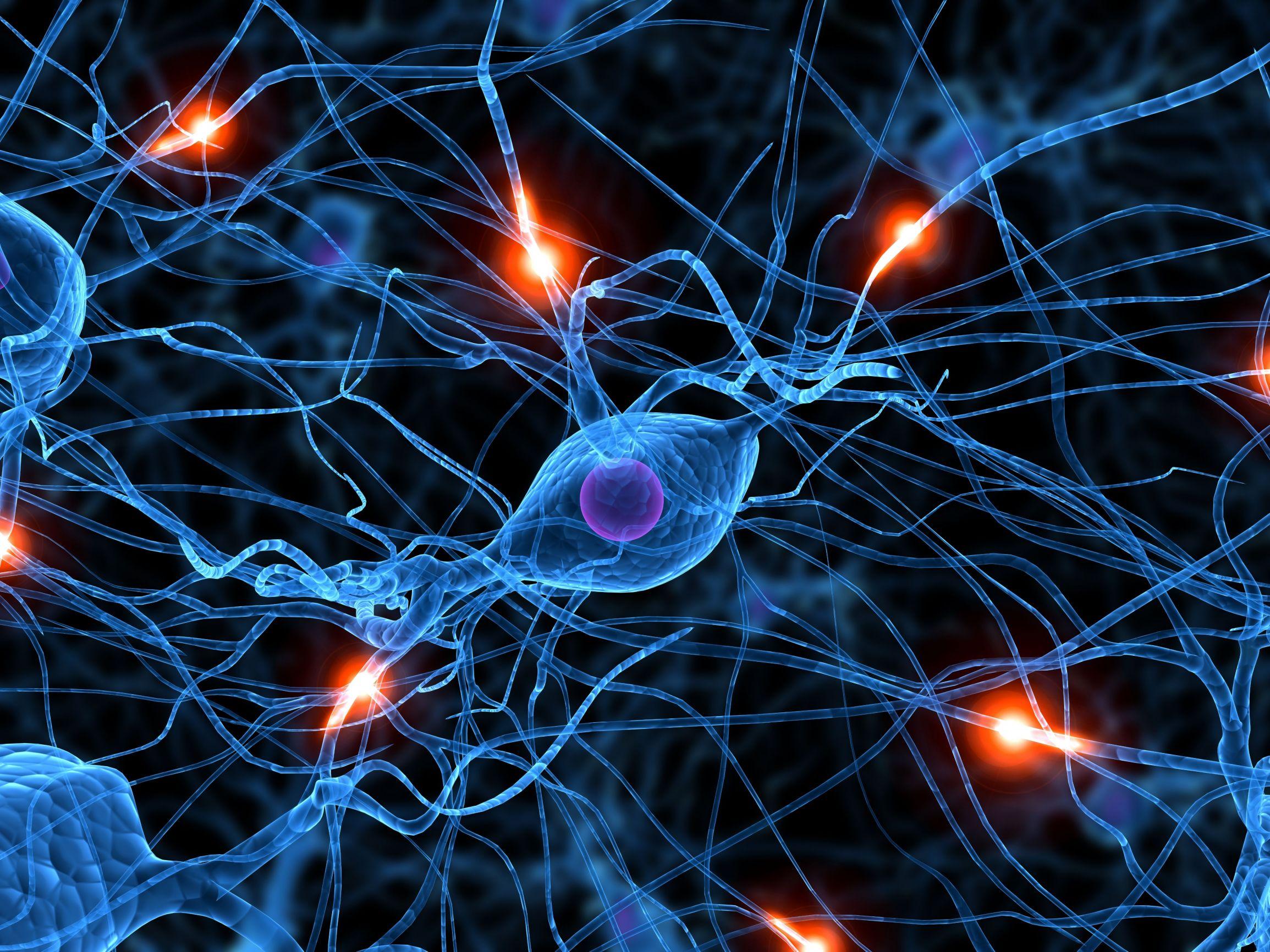 Las neuronas SI se regeneran: un mito derrumbado.