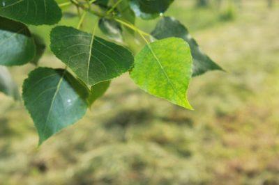 Ecuación matemática describe el interior de las hojas y ...